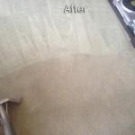 Everett-Carpet-Cleaning-Company