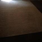 Everett-Fleas-Cleaning