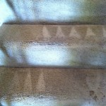 Everett-Stairs-Carpet-Cleaning